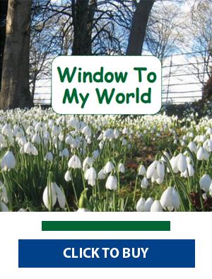 Window to My World